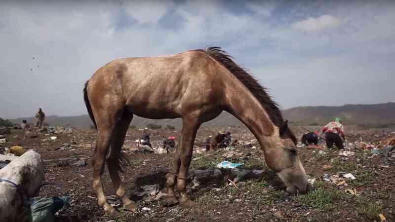 Pferd auf Mülldeponie